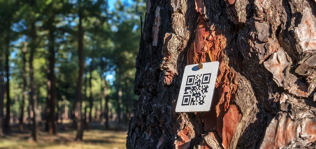 Driada, el software para la gestión de pinares